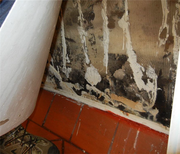 Mold behind wall panel before restoration